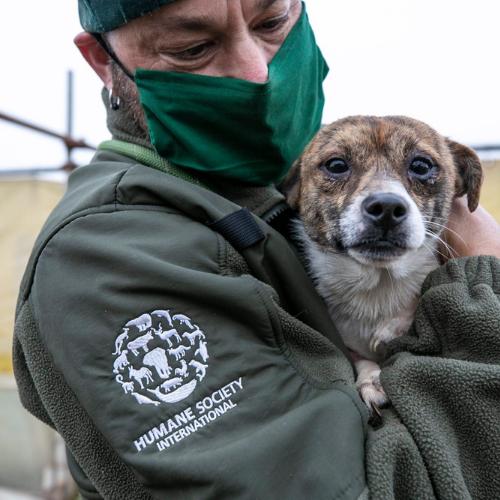 Humane Society International: salvati quasi 200 cani