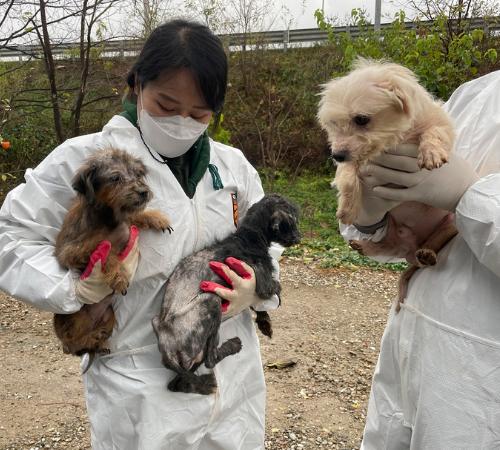Corea: oltre 100 cani salvati da un allevamento illegale
