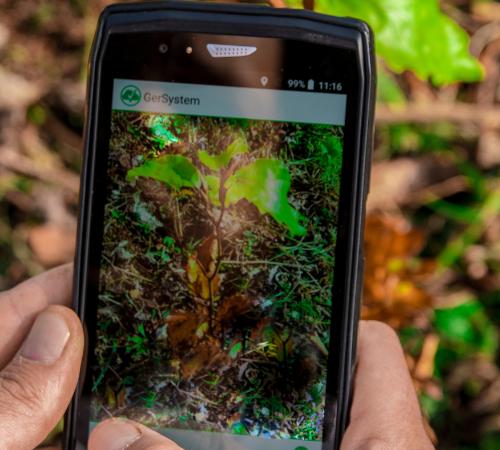 Treedom: un milione e mezzo di alberi piantati in dieci anni
