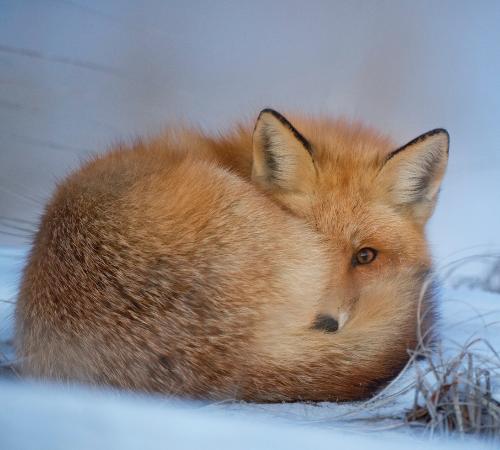 """Pellicce: in arrivo nuove politiche aziendali """"fur-free"""""""