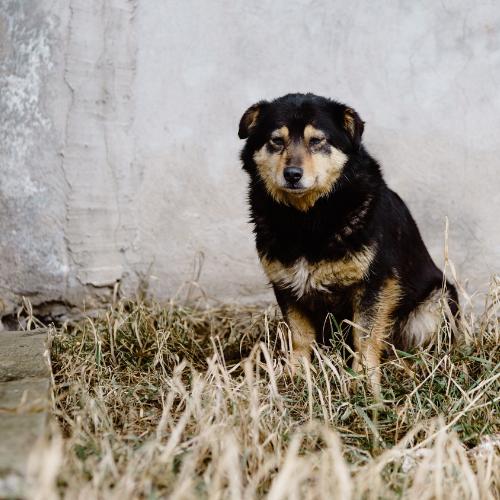 Ecco i cani abbandonati salvati da HSI