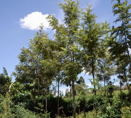 Treedom: 2 milioni di alberi piantati in 17 paesi nel mondo