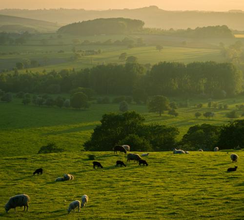 Impegno storico della Commissione UE nel vietare le gabbie per gli animali d'allevamento